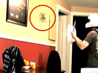 これはでけえwww部屋に現れた巨大な蜘蛛を捕獲しようとした男性がwwwww