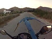 なんか凄い。スクーターに乗りながらオウムの散歩をする男たちのビデオが凄い。