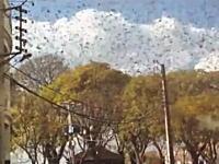 イナゴパニック。マダガスカルがイナゴの大群の襲来を受けて大変な事になってる。