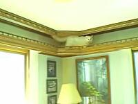 猫を愛しすぎて猫の為に自宅を大改造した男性。猫のドリームハウス。