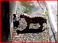 ホワイトタイガーに襲われて男性が死亡した動画の画質が良い版が投稿される。