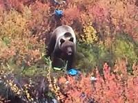 大きな熊と遭遇。パンを投げ与えてのんきにスマフォで撮影している人たち・・・。