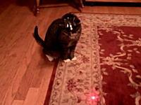 猫「僕の視界の全てにレーザーポインターが入ってる・・・。」ちょっとワロタwww