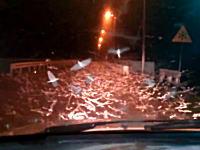 恐怖体験ww夜道でカゲロウの超大群と遭遇したらキモイ動画。いやああ(@_@;)