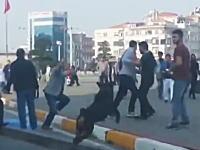 ワンコGJ動画。交通事故から喧嘩に発展してしまった場面にワンコが仲裁に入る。