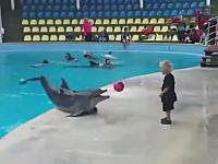 やっぱイルカって賢いんだな。小さな男の子のボール遊びの相手をするイルカ。
