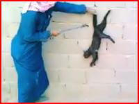 猫を壁に押し付けてしっぽを手斧?で切断するサウジの男性。これは再生注意。