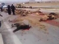 道路を歩かせていた羊の集団にトラックが突っ込んで地獄絵図に。散らばる死骸
