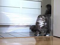 「我が家のニャンコをサランラップの罠にはめたったwww」という動画ww