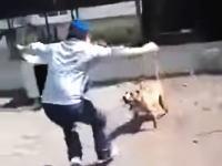 これはあほいwww鎖に繋がれている犬を猛烈におちょくっていたらwwwww