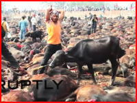数千の生贄・・・。ネパールの家畜を殺しまくるお祭りの映像がすごすぎ・・・。