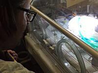 死にゆく赤ちゃんの為にパパが保育器の前でビートルズを歌う。動画が話題に。