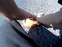 目の前で車に轢かれたニャンコを救おうと病院に運ぶ優しいお兄さんのビデオ。