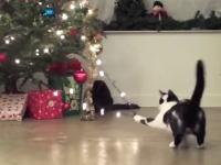猫にとってクリスマスツリーは年に数日だけ登場する季節もののキャットタワー。