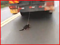どうしてこうなった(´°_°`)走るトラックに引きずられ続けているワンコが撮影される