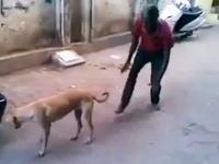 野良犬に後ろからそっと近づいてジャイアントスイングを仕掛ける(´°_°`)