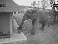 野生の象さんがゴミを拾ってゴミ箱へ!?というビデオがネットで人気になってるけど。