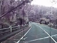 倒れすぎやろwww強風で木が倒れすぎて通行止めに。ギリギリの所で助かった車載。