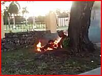 これは自殺?木陰でひっそりと燃えている男性の姿が目撃される・・・。フロリダ。