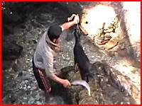 鉈(なた)の一撃で首を切断された子ヤギが長い時間暴れ続ける。(再生注意)