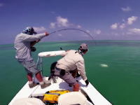 悲しい釣り人動画。アジ類の最大種GTがキタ――(゚∀゚)――!!と思ったら(´・_・`)