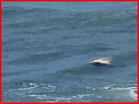うつ伏せのまま波に漂う溺れてしまった海水浴客の姿。それを必死に助けようとする人たち。