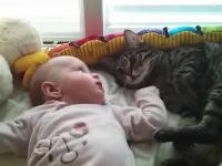 赤ちゃんとニャンコ。ベッドでゴロゴロしていたのを赤ちゃんに邪魔された猫がw