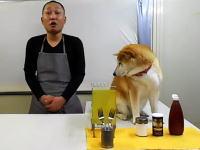柴犬に邪魔されまくるクッキング動画がはてブで人気に。スーパー冷奴編。(227users)