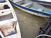 ピラニアのいる川に生肉を投げ込んでみるとw(゚o゚)wこれは多すぎるだろ・・・。
