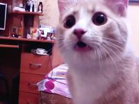 このネコいいなww投げたボールを拾って持って帰ってくるニャンコのビデオ。
