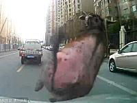街に出没した雄牛をパトカーで何度もドーン!と轢くwwwなかなか豪快な方法やねw