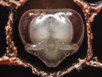 蜂の巣タイムラプス。働きバチの誕生。卵からかえった幼虫が働きバチに成長するまで。