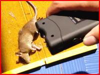 罠に掛かったネズミをスタンガンで拷問している男。これは炎上の予感がする。