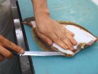 職人さんに学ぶヒラメ、真鯛、シマアジのさばき方。お刺身パックができあがるまで。
