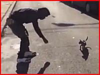 エサで誘った子猫を思いっきり蹴り飛ばす極悪な男のビデオ。再生注意。