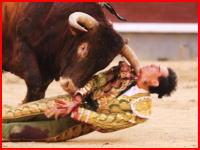 スペインの闘牛で大怪我。マタドールの喉を牛の角が貫通する(@_@;)そのビデオ。