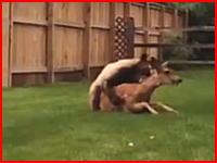 怖いLiveLeak。自宅の裏庭で鹿が大きな熊に襲われていた動画がコメント1500件超の人気動画に。