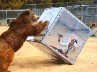 テレビ番組の裏側。この熊に襲われているのイモトアヤコじゃねえ?ww