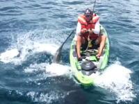諦めろよwwwカヤック釣りでサメに転覆させられても怯まないアングラー。こわいわw