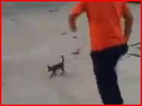 ニャンコ殺害。子猫を空高く蹴りあげて殺害する少年のビデオが投稿される。