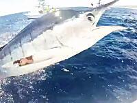 あぶねえwwwカメラ目線でカジキがボートに突っ込んできたあああ!