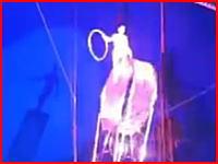 ハリスコサーカスで事故。パフォーマーが高い所から落下して重傷を負う。