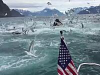 何頭おるのwwwクジラの群れが海底からドーン!至近距離で遭遇した大迫力のビデオ。