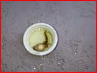プールで使う塩素にオタマジャクシを入れるとヤバイ事がおきる動画。これは(((゚Д゚)))