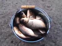 今日は大漁!バケツ一杯のコイを捕まえたぜ!と思ったら・・・。これはうまいw