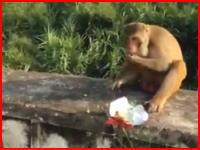 これは酷い(´・_・`)お猿さんに爆弾入りのスナック菓子を与えてみた動画がうpされる。