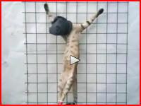 ニャンコを磔にして虐待。極悪な日本人女の動画が発掘される。「中川flv」