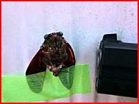養生テープで壁に貼りつけたセミをライターで拷問する動画がネットに上げられる。