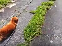 散歩中に突然飼い主が倒れたら犬はどんな反応をする?実験してみた動画が人気に。