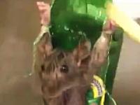 店を荒らした罪で店主に捕まった2匹のネズミが磔にされているビデオ。